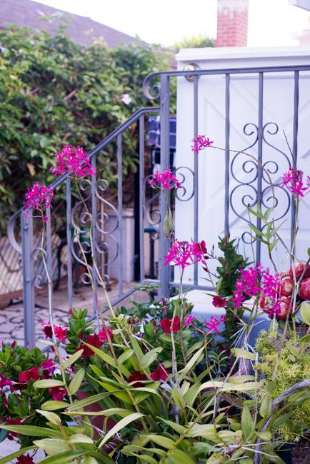 Kimberly-Kassner-Garden-ryanbenoitphoto-thehorticult-RMB_7782
