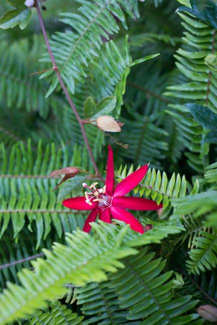 Kimberly-Kassner-Garden-ryanbenoitphoto-thehorticult-RMB_7802