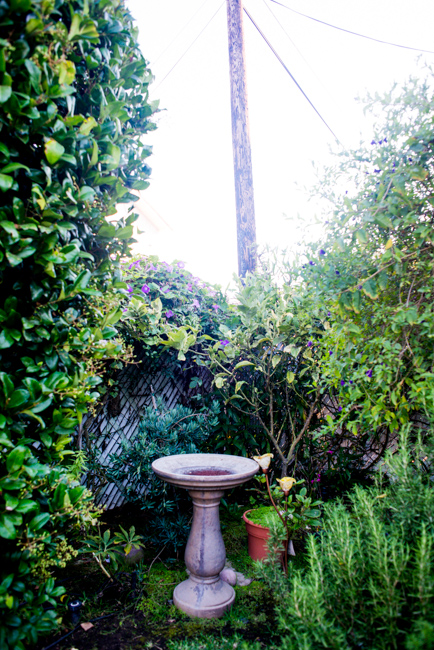 Kimberly-Kassner-Garden-ryanbenoitphoto-thehorticult-RMB_7817