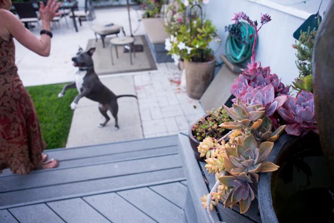 Kimberly-Kassner-Garden-ryanbenoitphoto-thehorticult-RMB_7861