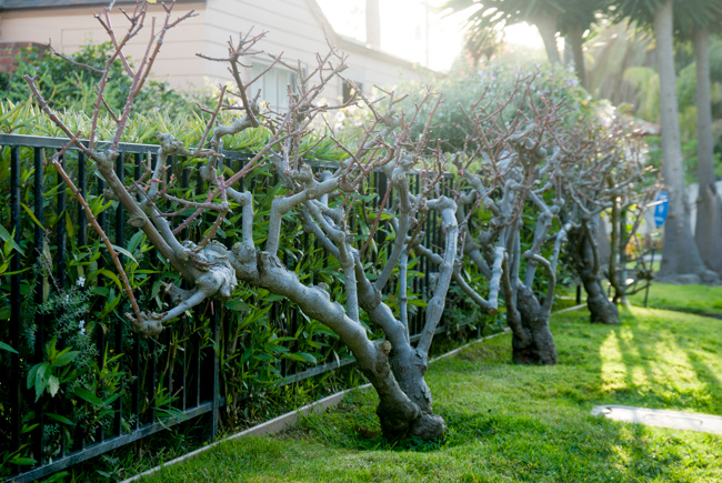 Kimber-Kassner-Garden-ryanbenoitphoto-thehorticult-_RMB6494