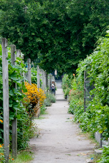 Berkeley-Community-Garden-John McLachlan_Garden path-featured-on-thehorticult