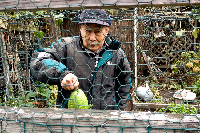 Berkeley-Community-Garden-sarah hutt_Tim Chan chayote squash-featured-on-thehorticult
