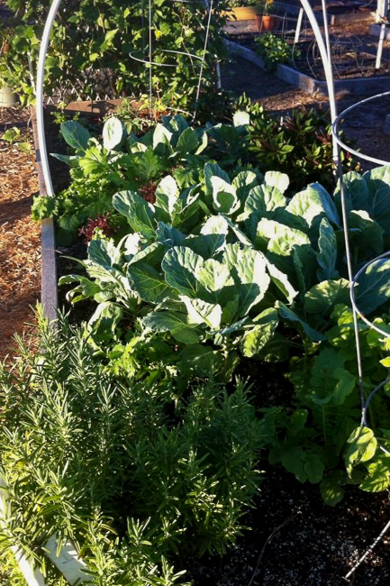 Boca-Raton-Community-Garden-boca-2-image-featured-on-thehorticult
