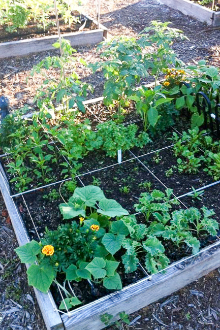 Boca-Raton-Community-Garden-boca-3-image-featured-on-thehorticult