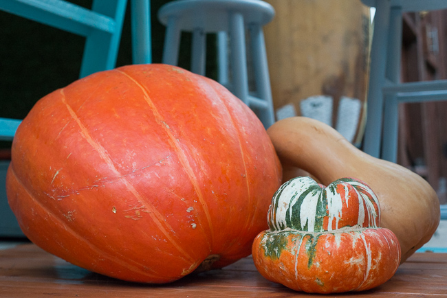 Fall-Decorating-Entertaining-with-gourds-ryanbenoitphoto-thehorticult-RMB_1504