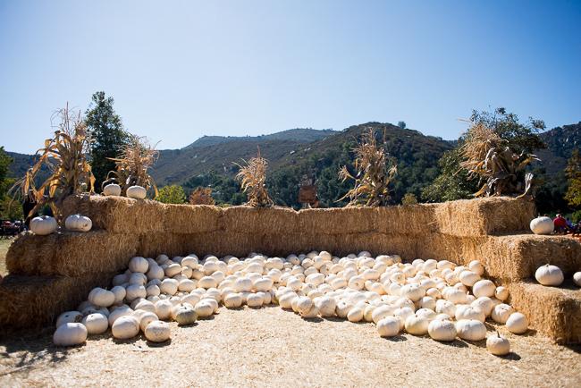 Ghostly-Lumina-Pumpkins-Bates-Nut-Farm-ryanbenoitphoto-thehorticult-RMB_0743