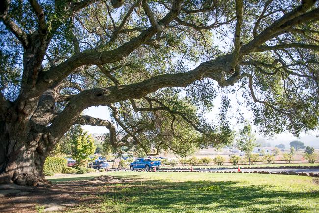 Oak-Tree-Entrance-Bates-Nut-Farm-ryanbenoitphoto-thehorticult-RMB_0541