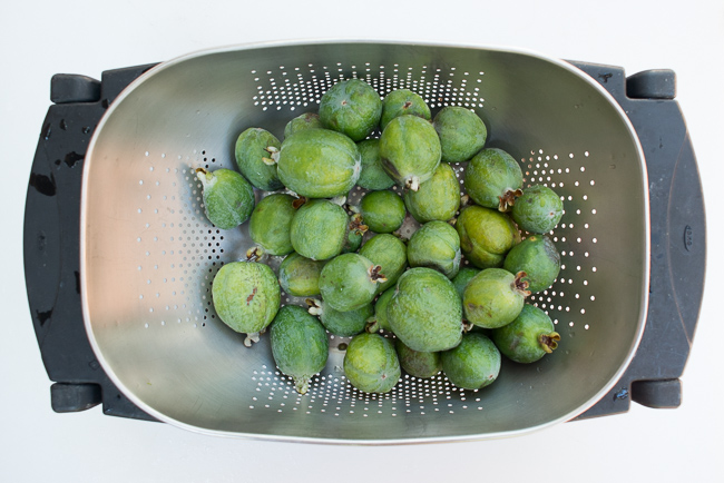 Pickled-guava-feijoa-sellowiana-ryanbenoitphoto-thehorticult-RMB_9630
