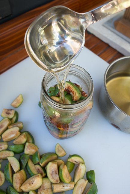 Pickled-guava-feijoa-sellowiana-ryanbenoitphoto-thehorticult-RMB_9654