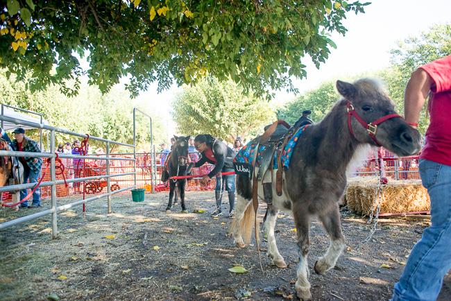 Pony-rides-Bates-Nut-Farm-ryanbenoitphoto-thehorticult-RMB_0549