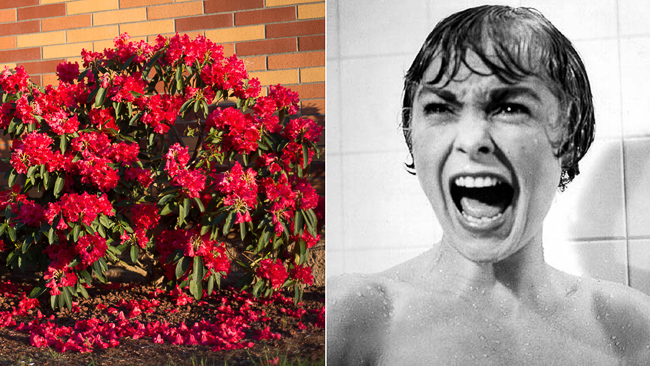 Rhododendron-Psycho-scary-plants-thehorticult-3