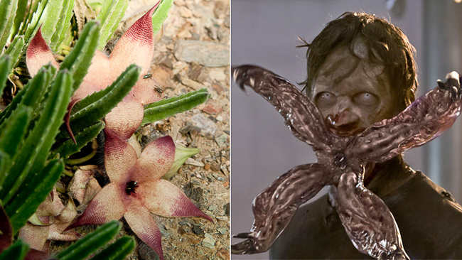 Hort Ified 11 Spooky Plants And Their Scary Movie Doppelgangers