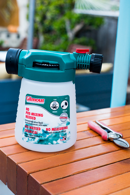 DIY-Seaweed-Liquid-Fertilizer-Part-2-Dilution-and Application-ryanbenoitphoto-thehorticult-RMB_2195