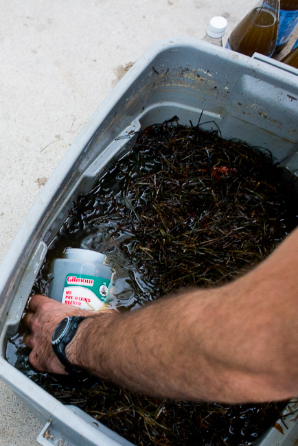 DIY-Seaweed-Liquid-Fertilizer-Part-2-Dilution-and Application-ryanbenoitphoto-thehorticult-RMB_2231