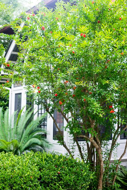 Downtown-Wilmington-NC-Historic-Garden-Walking-ryanbenoitphoto-thehorticult-RMB_3918