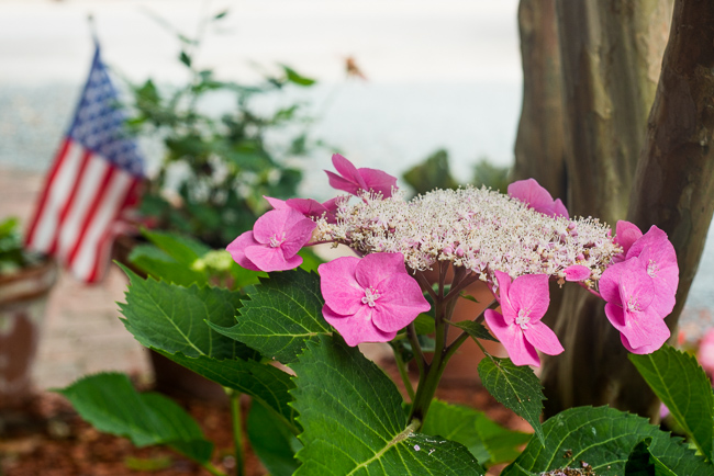 Downtown-Wilmington-NC-Historic-Garden-Walking-ryanbenoitphoto-thehorticult-RMB_3928