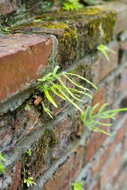 Downtown-Wilmington-NC-Historic-Garden-Walking-ryanbenoitphoto-thehorticult-RMB_3937