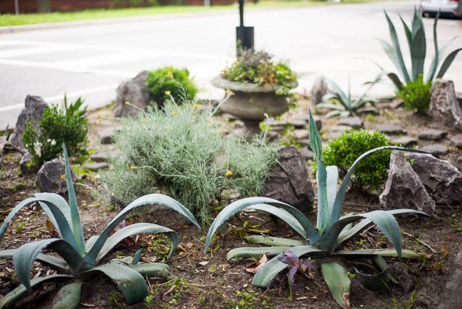Downtown-Wilmington-NC-Historic-Garden-Walking-ryanbenoitphoto-thehorticult-RMB_3972