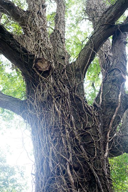 Downtown-Wilmington-NC-Historic-Garden-Walking-ryanbenoitphoto-thehorticult-RMB_3980