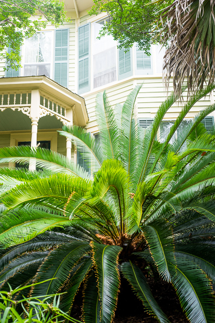 Downtown-Wilmington-NC-Historic-Garden-Walking-ryanbenoitphoto-thehorticult-RMB_3991