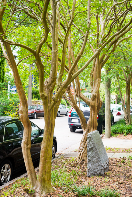 Downtown-Wilmington-NC-Historic-Garden-Walking-ryanbenoitphoto-thehorticult-RMB_3992