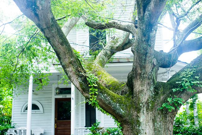Downtown-Wilmington-NC-Historic-Garden-Walking-ryanbenoitphoto-thehorticult-RMB_3999