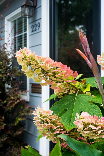 Downtown-Wilmington-NC-Historic-Garden-Walking-ryanbenoitphoto-thehorticult-RMB_4015