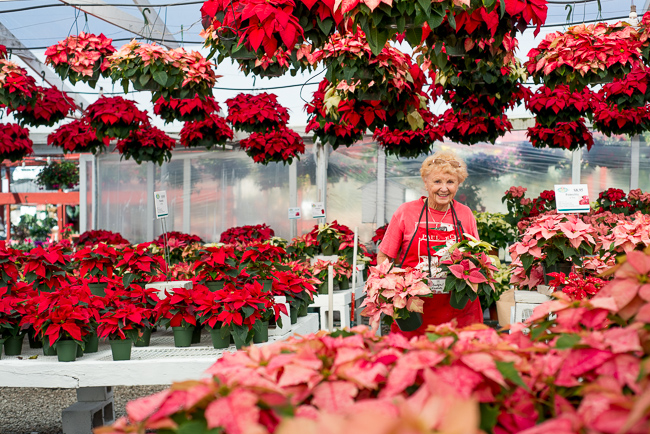 Evelyn-Weidner-poinsettias-Weidners-ryanbenoitphoto-thehorticult-RMB_2514