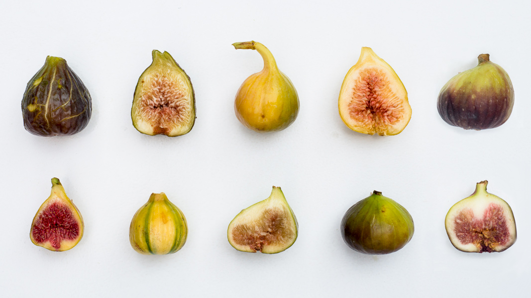 five figs friday varieties to try this fall the horticult