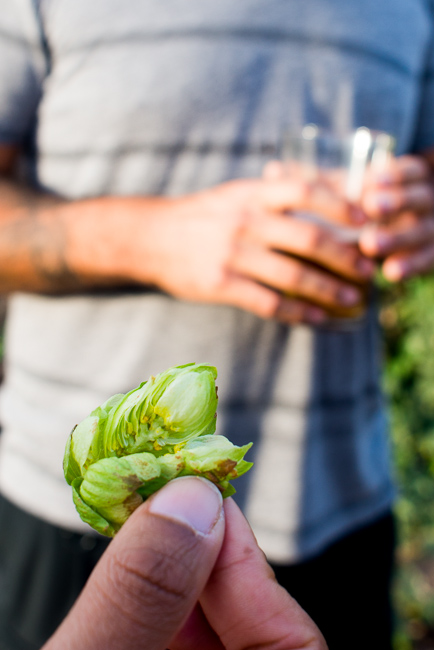 Stone-Brewery-Farm-Tour-ryanbenoitphoto-thehorticult-RMB_1771