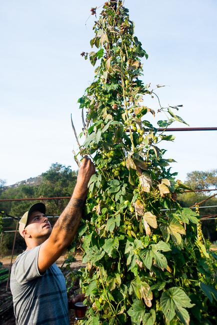 Stone-Brewery-Farm-Tour-ryanbenoitphoto-thehorticult-RMB_1774