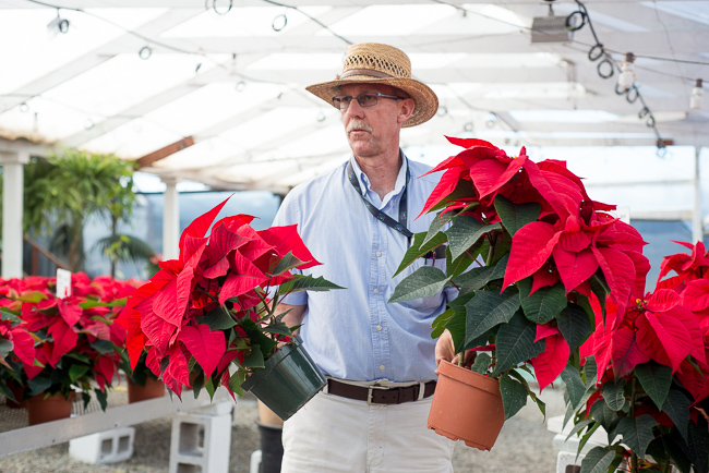 poinsettias-Weidners-ryanbenoitphoto-thehorticult-RMB_2475