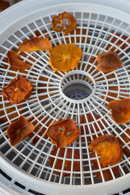Dehydrated-persimmons-ryanbenoitphoto-thehorticult-RMB_3358