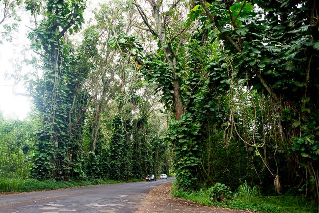 Kauai-Travel-2013-ryanbenoitphoto-thehorticult-RMB_3472
