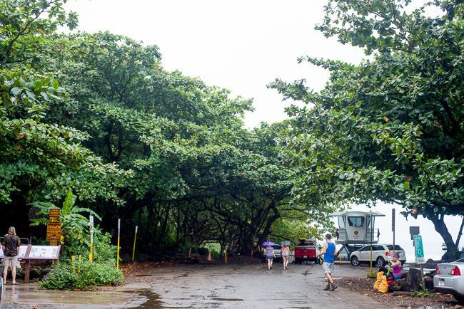 Kauai-Travel-2013-ryanbenoitphoto-thehorticult-RMB_4252
