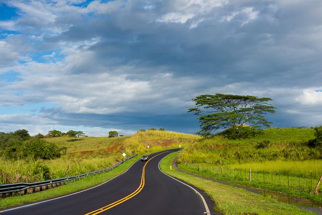Kauai-Travel-2013-ryanbenoitphoto-thehorticult-RMB_4327