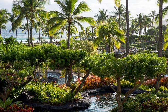 Kauai-Travel-2013-ryanbenoitphoto-thehorticult-RMB_4507