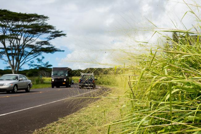 Kauai-Travel-2013-ryanbenoitphoto-thehorticult-RMB_4709