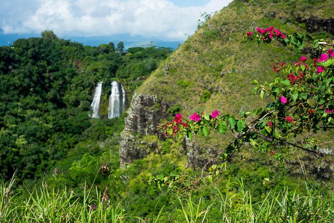 Kauai-Travel-2013-ryanbenoitphoto-thehorticult-RMB_5023