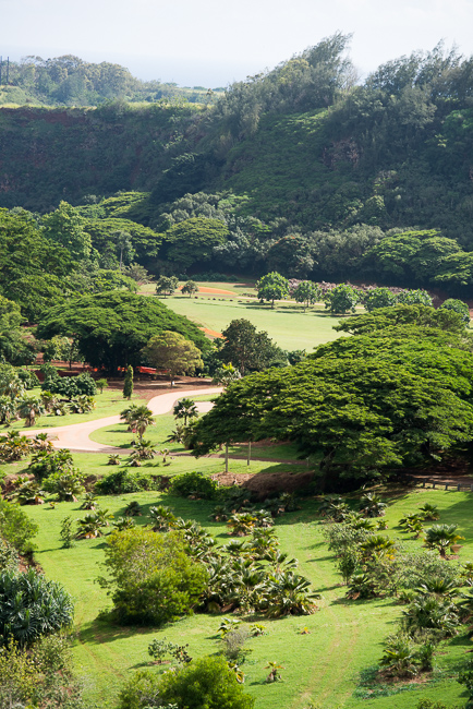 Kauai-Travel-2013-ryanbenoitphoto-thehorticult-RMB_5101