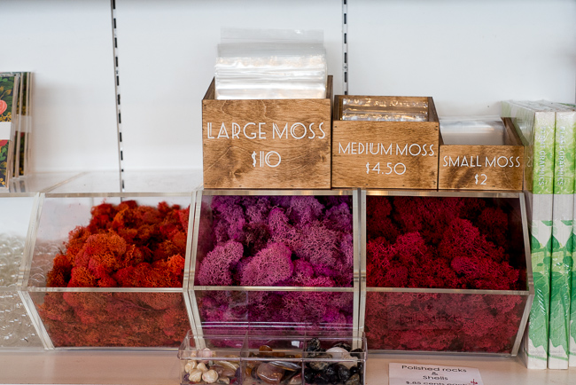 Moss Bar http://www.shoppigment.com/colored-terrarium-moss/