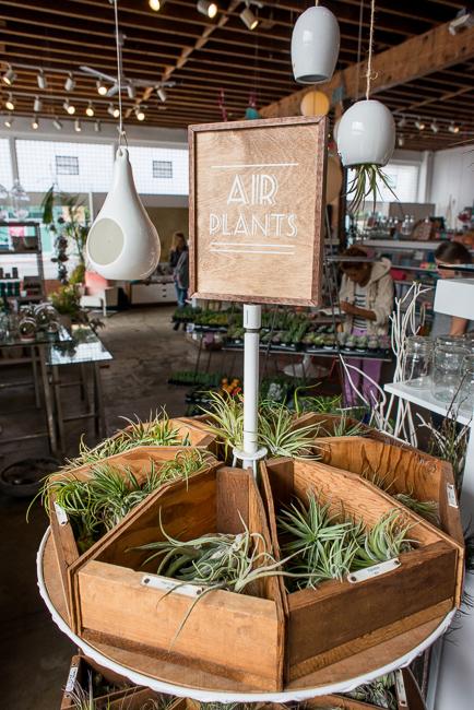 Air Plants - $2 to $8 http://www.shoppigment.com/plants/