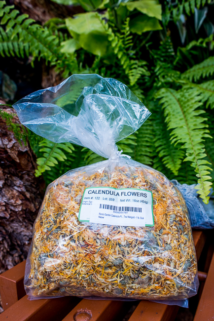calendula-olive-oil-skin-balm-salve-ryanbenoitphoto-thehorticult-RMB_5620