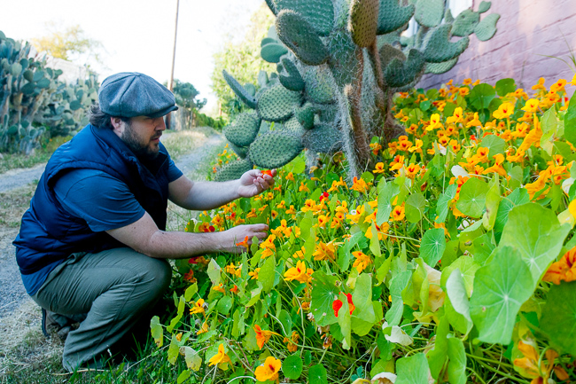 tropaeolum-majus-nasturtium-indian-cress-monks-cress-thehorticult_RMB9793-ryanbenoitphoto-for-thehorticult
