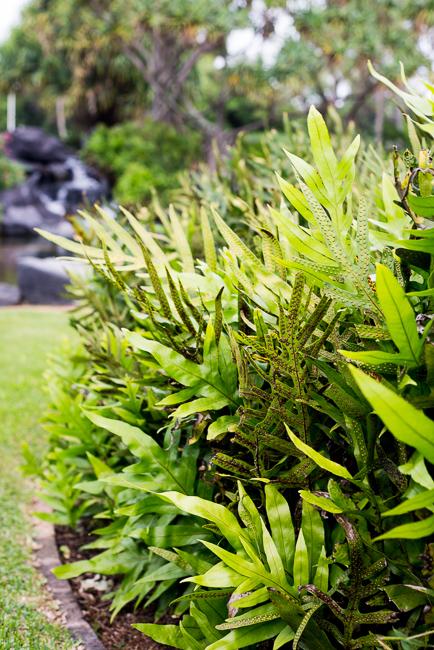 Room With A Botanical View Explore The Kauai Resort