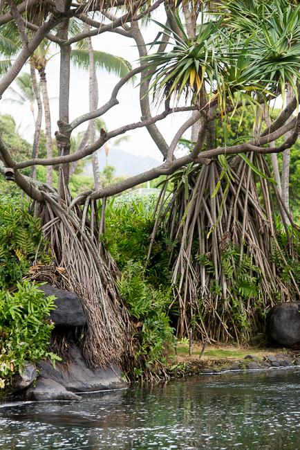 Grand-Hyatt-Poipu-Kauai-Travel-2013-ryanbenoitphoto-thehorticult-RMB_3526