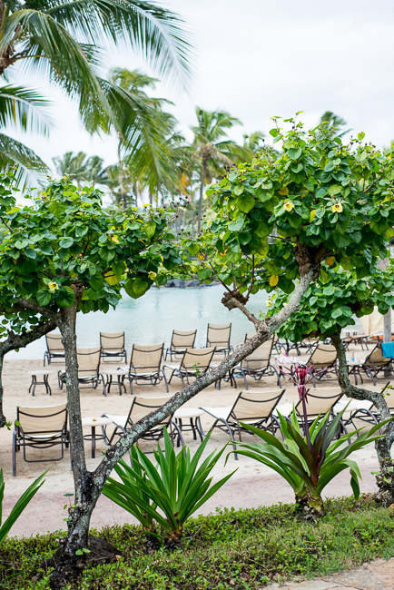 Grand-Hyatt-Poipu-Kauai-Travel-2013-ryanbenoitphoto-thehorticult-RMB_3609