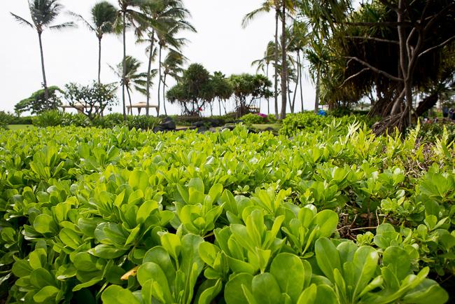 Grand-Hyatt-Poipu-Kauai-Travel-2013-ryanbenoitphoto-thehorticult-RMB_3631
