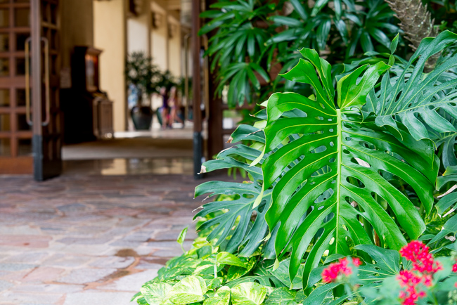 The split-leaf philodendron are graze the entrance to the lobby.
